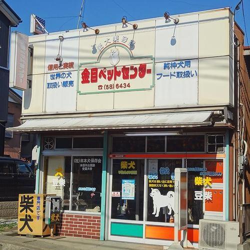 柴犬専門店です
