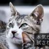 キャッチコピーのアイデア!タイトル&キーワード(無料)