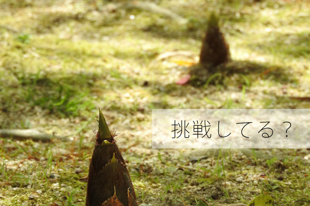 three-bamboo